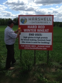 Hard Red Winter Wheat Sign