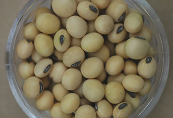 Soybeans in a glass bowl